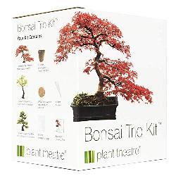 Plant Theatre Bonsai Trio Kit Anzuchtset verschenken